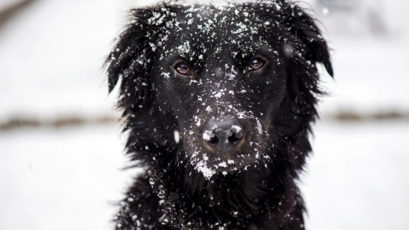 5 Ways to Protect Your Pets Feet in the Snow & Cold Weather
